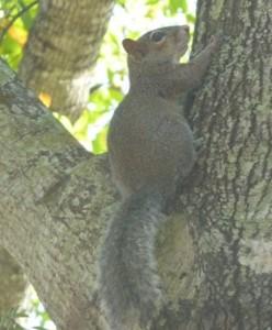Un simpatico scoiattolo