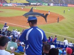 Il curioso copricapo di un tifoso dei Tiburones