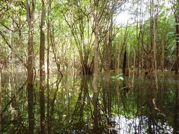 L'incanto della foresta sommersa in Amazzonia