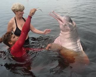 Mia moglie Elisabetta a contatto con un delfino rosa