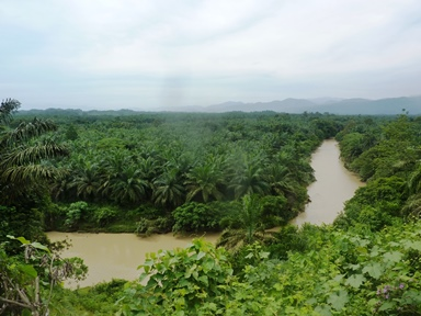Coltivazioni di palma a perdita d'occhio sulla via per Tangkahan