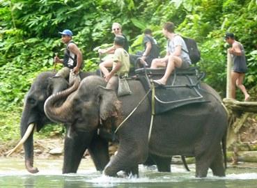 Theo e una femmina del suo harem trasportano i turisti