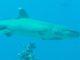 Finalmente squali e tartarughe alle Maldive